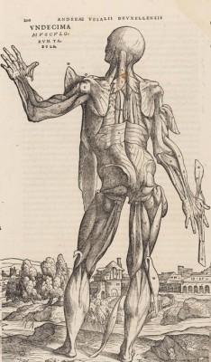 Anatomische tekening van de mens