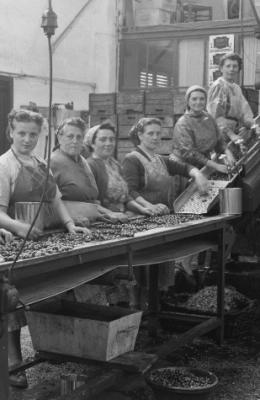 Bedrijvigheid in de conservenfabriek van Troffaes - Erfgoedbrugge.be