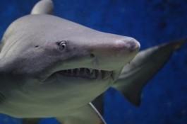 Foto van een haai