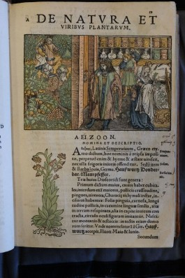 Adam LONICER, Naturalis historiae opus novum, Frankfurt 1551.