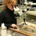 Een onderzoekster analyseert een schilderij met geavanceerde aparatuur
