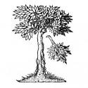 Logo CERL