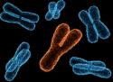 Y-chromosoom