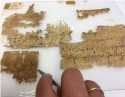 Conservator-restaurator Khirbet Mird Papyrus Project